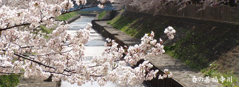 春の善福寺川