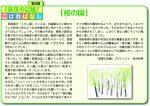 第8回 「桜の園」2019年度№342
